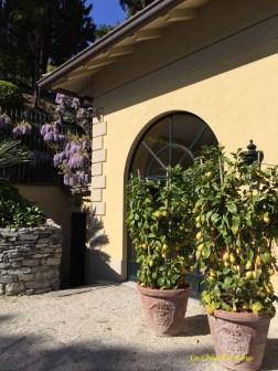 Wisteria and lemons outside the summer house of Villa Balbianello