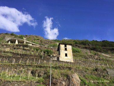 Vines On The Slopes Of The Valtellina