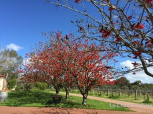 Carilley Estate Winery Swan Valley WA