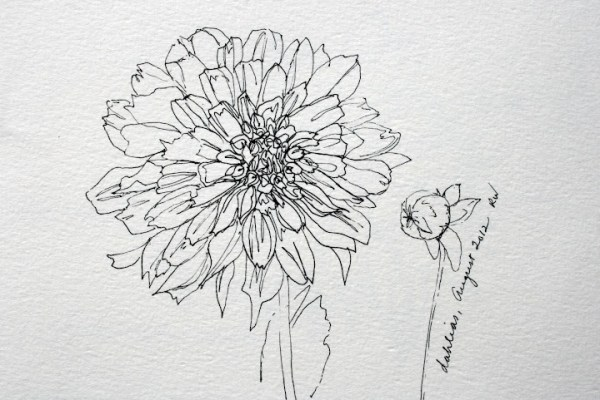 Inspired by Dahlias Photos Watercolors Pen Ink