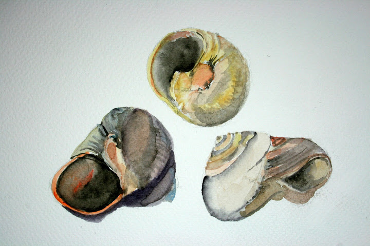 Moon Snail Project  Rosemarys Blog  Page 2
