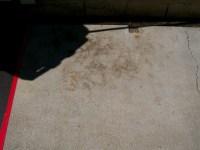 Concrete Stain  Rose Masonry and Concrete