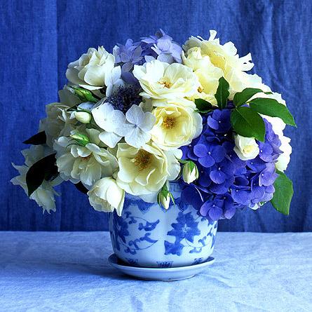 Am I Blue  Rose Notes