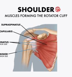 shoulder muscles rotator cuff [ 1440 x 864 Pixel ]