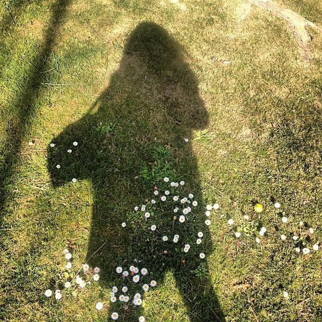 Sombra de roser amills