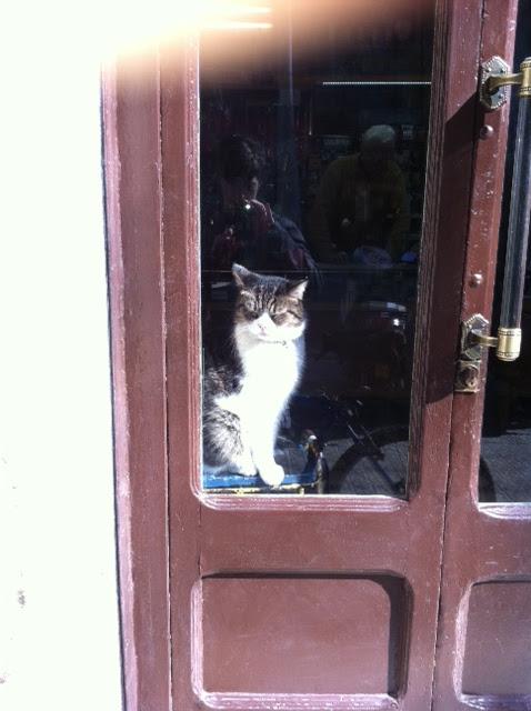 gato en una tienda de barcelona