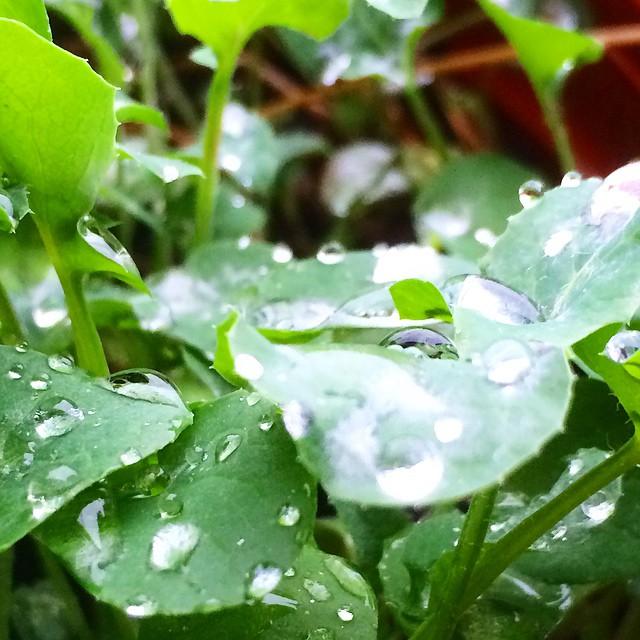 A las plantitas de mi maceta les gusta mucho el día que hace hoy, alegrémonos por ellas y buenos días!!!!