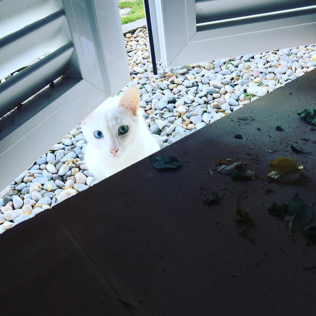 Buenos días! Hay un gatito espía en el @barceloformentor ;))
