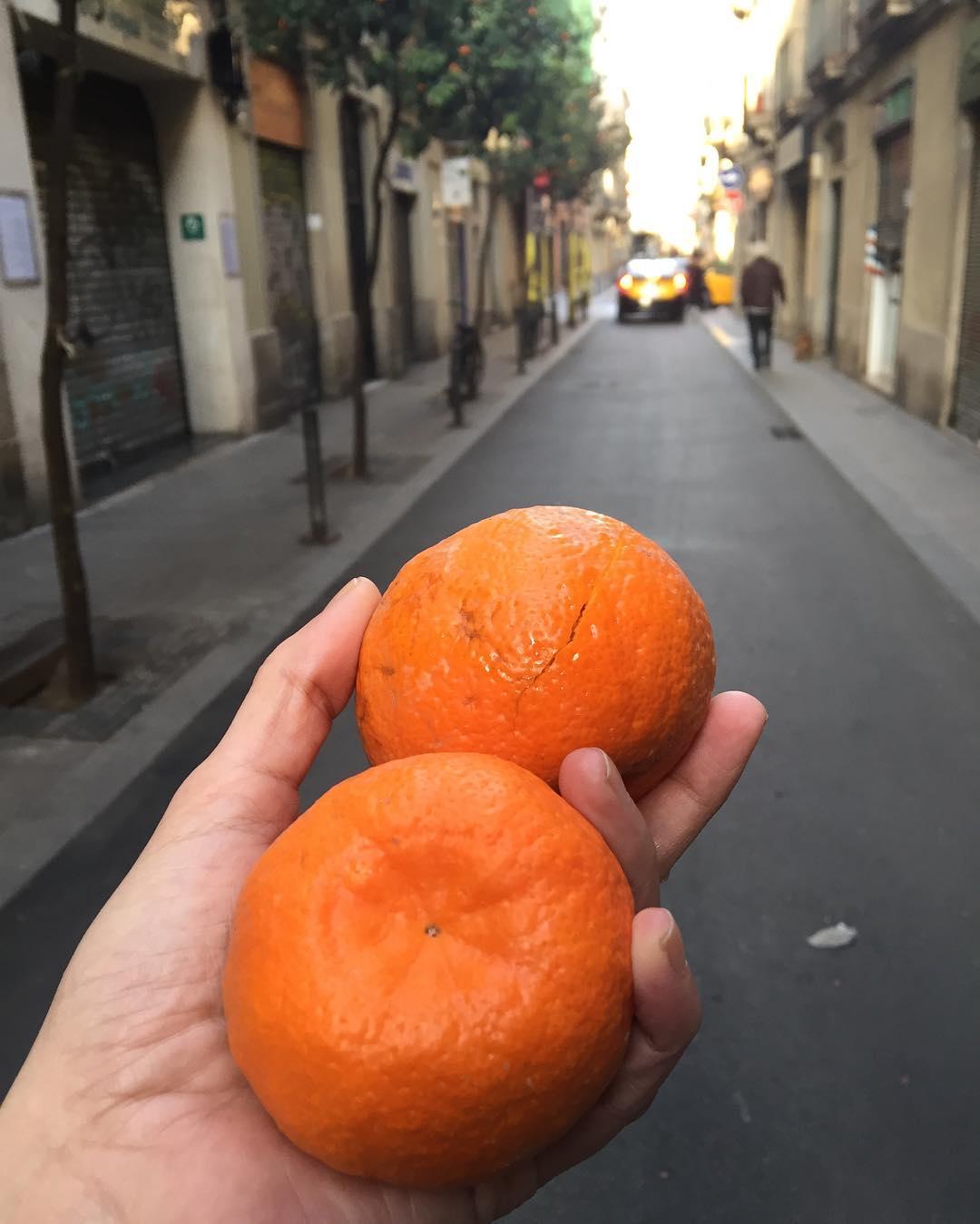 Recolectamos naranjas amargas ;))