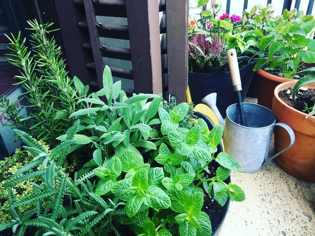 Os presento mi nuevo jardín, obra de Emidio Ciompi #buenosdias #bondia #bongiorno