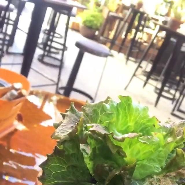 Café en un oasis