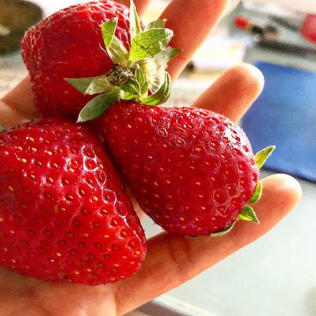 Escribo, oigo a @yvesuag con su #gaujazz, como fresas y soy feliz ;))