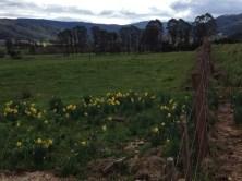 Pyengana, Tasmania