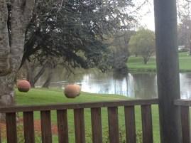Meander River, Deloraine Tas