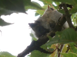 baby goldcrest
