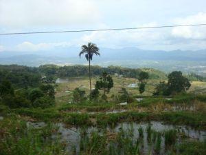 Sulawesi, Indonesia.