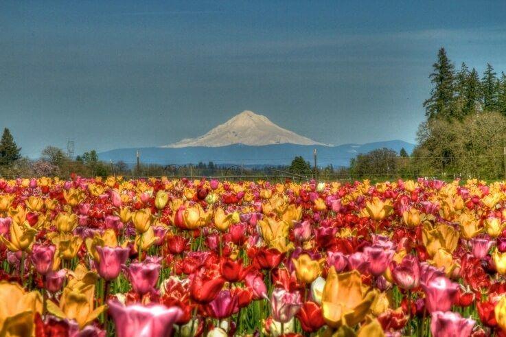Rose Garden de Portland: más de 550 especies y 7.000 rosales