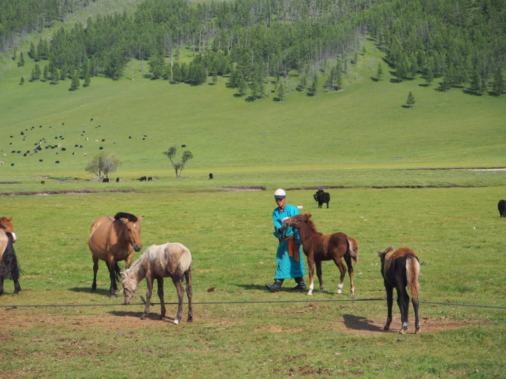 Mongolia, Travel with Rose