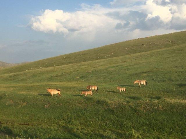 Parque Nacional Khustain