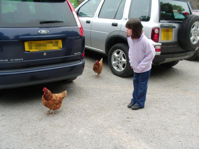 Quilt shop chickens2