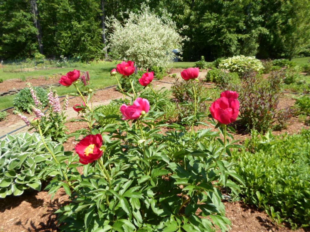 Flowers at Rosewood Landing NH