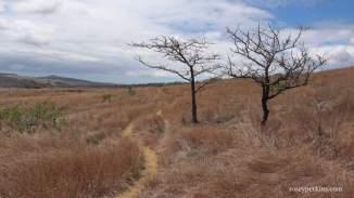 Ambondromifehy, Madagascar