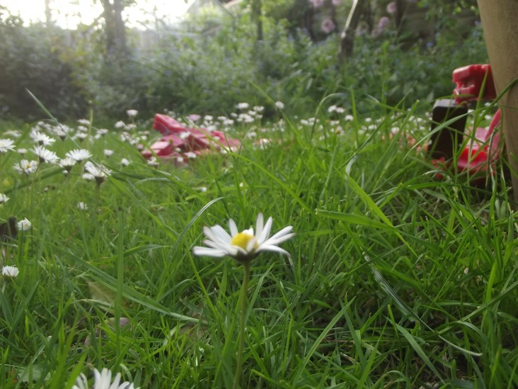 A pretty daisy close up and my sculptural figures in the grass .
