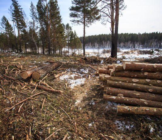 Из Иркутской области незаконно вывезли в Китай более 3,5 тысяч кубометров древесины. Фото: recyclemag.ru