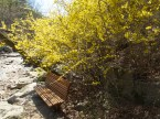 Spring flowers Gwanaksan