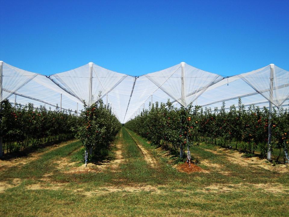 Rosmarinonewsit  AGRINTESA Incentivi per la melicoltura