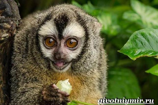 Eläimet Southern-America - Kuvaus-ja-Ominaisuudet - Animal-Etelä-Amerikka-8