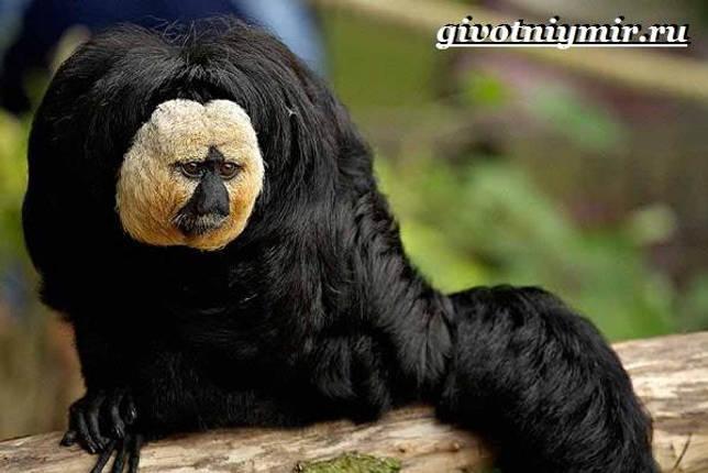 Eläimet Southern-America-Kuvaus-ja -ominaisuudet - Animal-Etelä-Amerikka-10