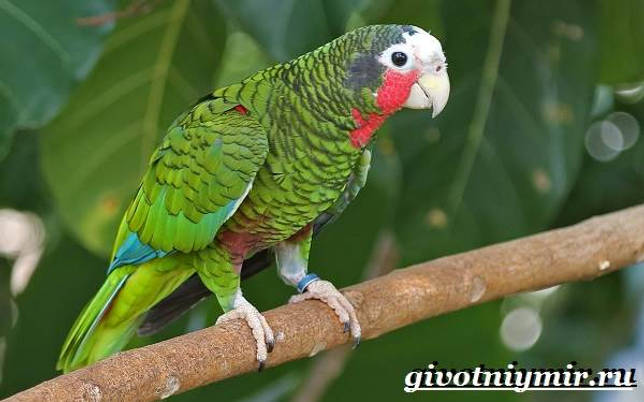Eläimet Southern-America-Kuvaus-ja -ominaisuudet - Animal-Etelä-Amerikka-25