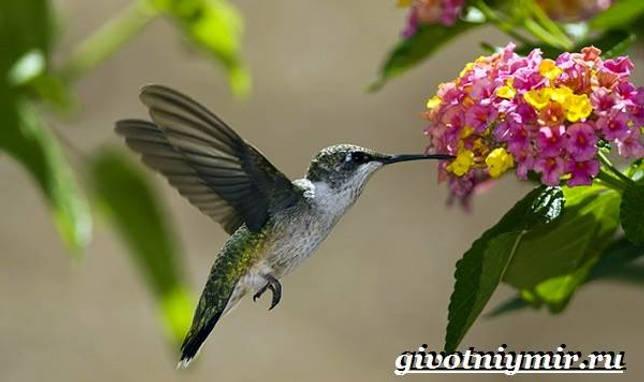 Eläimet Southern-America-Kuvaus-ja -ominaisuudet - Animal-Etelä-Amerikka-27
