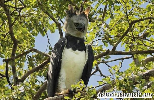 Eläimet Southern-America-Kuvaus-ja -ominaisuudet - Animal-Etelä-Amerikka-28