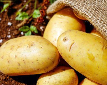 Ziemniak dobry na wszystko...