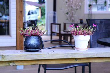 Ozdoby w doniczkach — jak dbać o rośliny pokojowe? [PORADNIK]