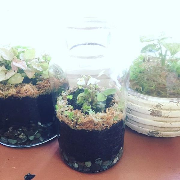 Today's terrarium trials, yet to be capped...