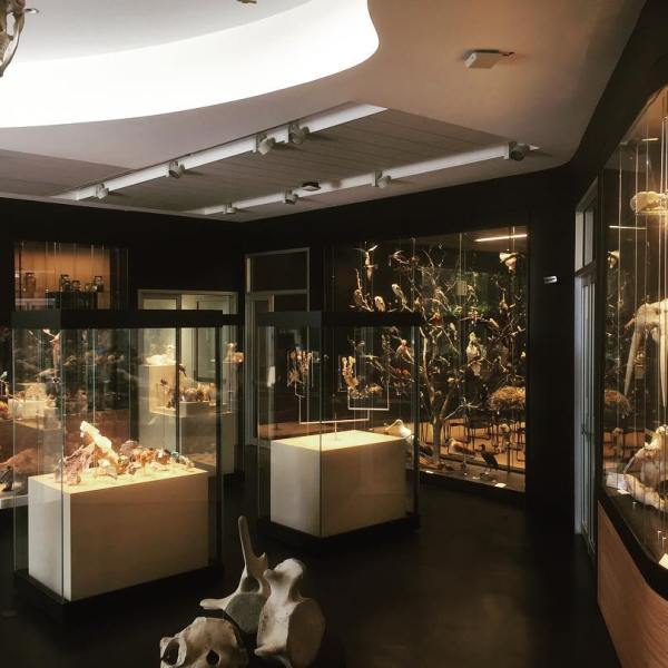 UNE's new Natural History Museum