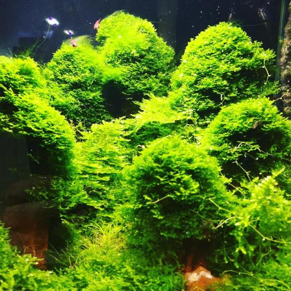 Subscape Aquarium, Richmond Victoria