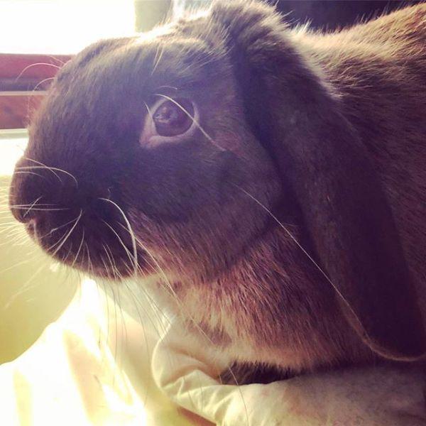 🐇 Rabbit-sitting with Mocha