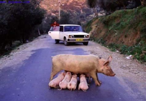 breast-feeding-traffic-jam