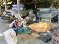Impish grandma processing maize