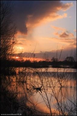 Aux environs de Chaumont sur Loire en février 2014