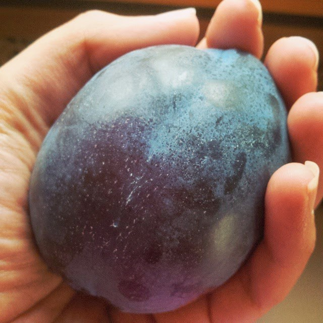 Large plum bought from an Italian supermarket, Vicenza, Italy