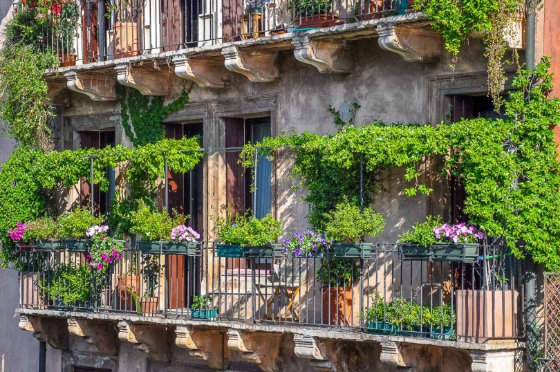 A balcony garden idea with potted and creeper plants - Vicenza, Italy - rossiwrites.com