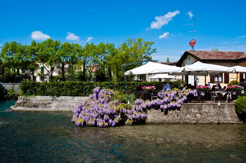 Wisteria draping a restaurant on water, Borghetto sul Mincio, Veneto, Italy