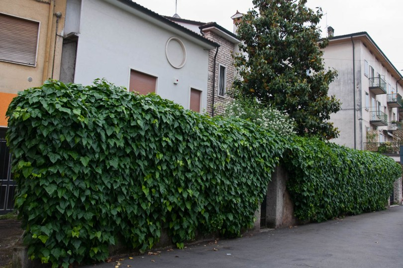 A living fence, Vicenza, Italy - www.rossiwrites.com