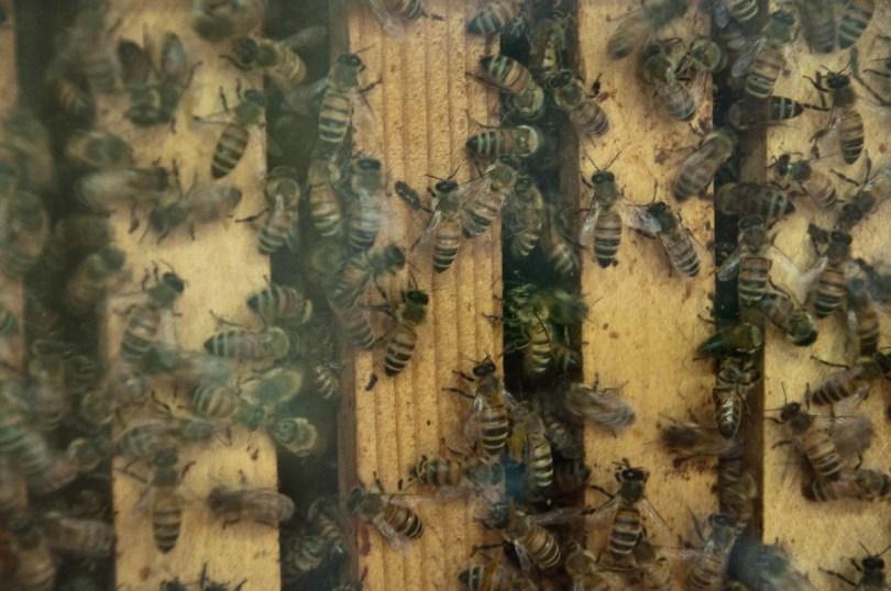 Beehive, Esapolis, Padua, Veneto, Italy - www.rossiwrites.com