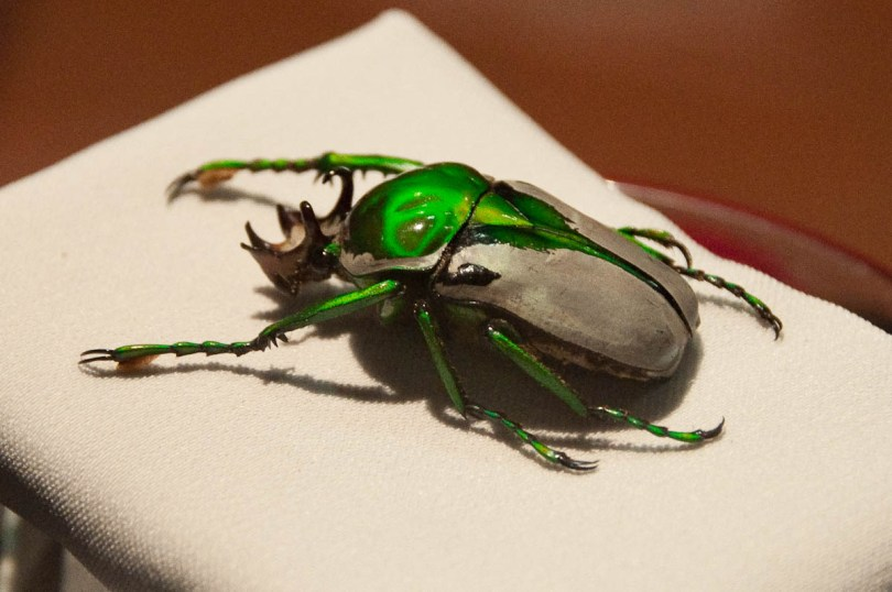 Beetle, Esapolis, Padua, Veneto, Italy - www.rossiwrites.com